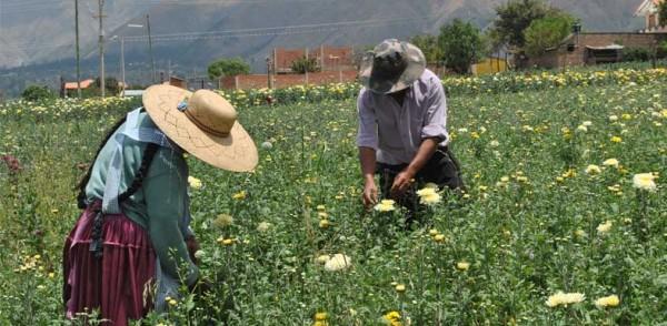 Las flores y Cochabamba