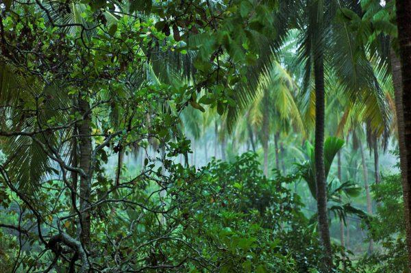 Más allá del carbono: Salvar los bosques para no quedarnos sin agua