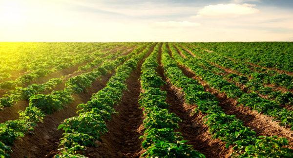 La tierra en disputa. Agricultura, acumulación y territorio en la Argentina reciente