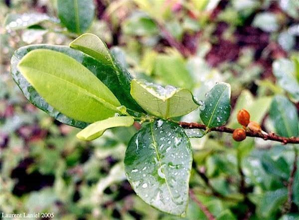 Apuntes para una ecología de la hoja de coca