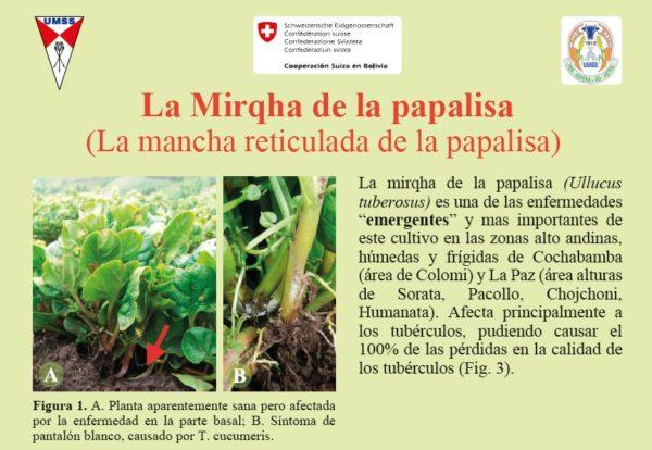 La Mirqha de la papalisa (La mancha reticulada de la papalisa)