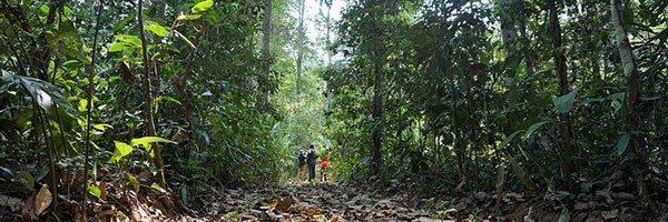 Boletín de CIFOR: los bosques nuestra mayor esperanza frente al calentamiento global