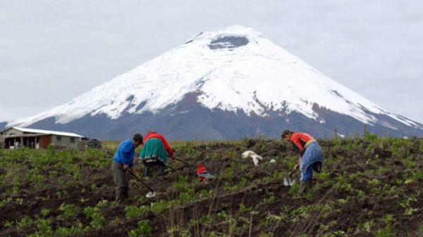 """Artículo """"Desarrollismo y fase de commodities: la agricultura de Ecuador en la crisis capitalista"""""""