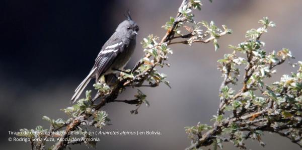 Solicitación de CEPF para la Actualización del Perfil del Ecosistema para los Andes Tropicales