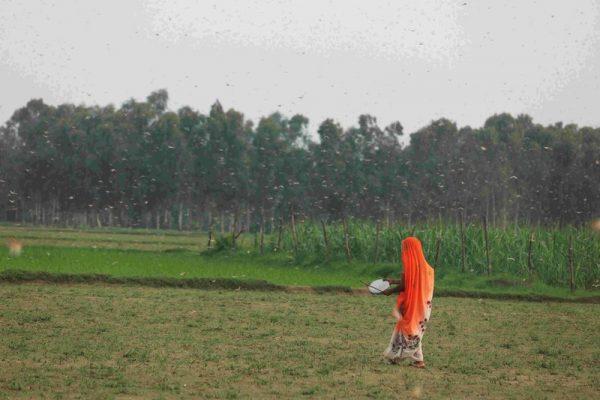 Agroecología vs caos climático: en Asia campesinas y campesinos encabezan la batalla