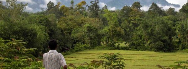 Bosques, árboles y agroforestería para el planeta y las personas CIFOR-ICRAF