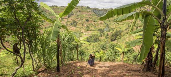 La degradación de tierras socava el bienestar de 3200 millones de personas.